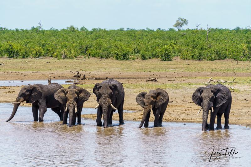 Olifanten aan de drinkpoel